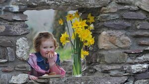 Ireland goes yellow for Daffodil Day