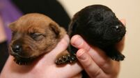 Plea for information after pups left to die on road