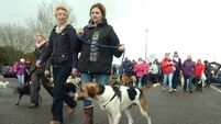 Thousands join walk seeking tougher animal cruelty laws