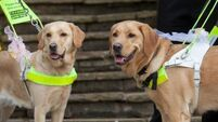 Quirky World ... Smitten pooches guide owners down the aisle
