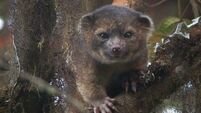 Tree-living carnivore tops this year's list of newly discovered species