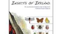 Insect book that promises not to bug you