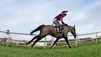 Last Instalment cleared for Gold Cup run
