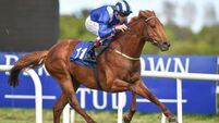 Mustajeeb set to carry Weld hopes