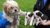 Garda raid leads to recovery of missing pet farm dogs