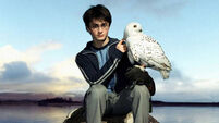Harry Potter returns... as a grown up
