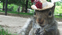 Quirky World ... Sneezy the squirrel becomes internet sensation