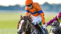 Landmark win for O'Brien in Cesarewitch