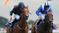 Tapestry weaves Taghrooda downfall