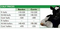 Cattle marts: Friesian store bullock 'best buy' at the marts for those seeking to turn a healthy profit