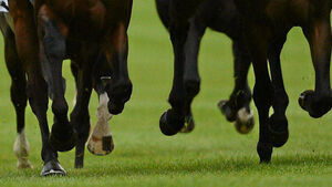 Stud farm settles damages claim