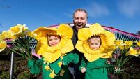 Daffodil Day is back in clover