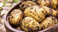 Potato supplier sues Tesco