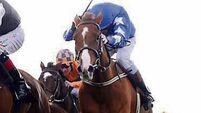 Trio entitled to share of racehorse, rules court