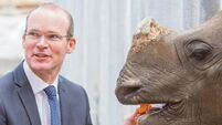 State should back Fota, says Coveney