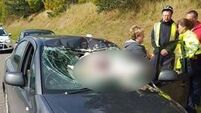 PICS: Low-flying swan smashes into car windscreen