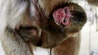 Quirky World: Zoo apologises for making a monkey out of princess