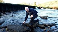 Rescue operation saves 10,000 fish after weir collapse in Ballincollig