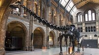 QUIRKY WORLD ... Museum's famous dinosaur given the freedom to roam