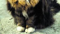 QUIRKY WORLD ... Cat stink giving St Bernard residents a dog's life