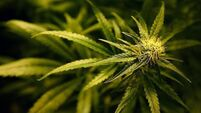 Life term for 2.7g pot deal revoked