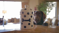 VIDEO: One dog's elaborate mission to get a treat