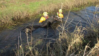 Group rewards fire brigade for rescuing stricken horse from muddy river