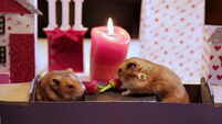 Let this tiny hamster date inspire your Valentine's Day plans