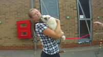 VIDEO: A super-excited pug meets her human after being stolen