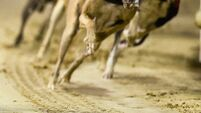 Greyhound body warns of funding issues at tracks