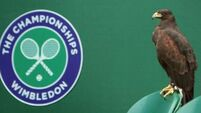 Hawk set to stay above Wimbledon skies