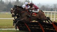 Bayan looks  likely to swerve Cheltenham for French race
