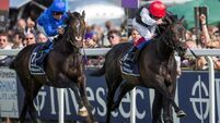 King George next for Golden Horn