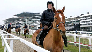 Willie Mullins confident Annie Power will deliver in OLBG Mares' Hurdle