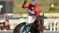 Sprinter Sacre's comeback run good enough to warrant the vote at Cheltenham