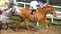 All-Weather Championships next for polytrack-loving Paene Magnus