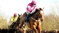 Willie Mullins confirms Don Poli for RSA Chase at Cheltenham