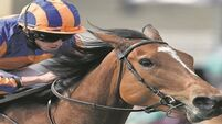 O'Brien 'very happy' with Found ahead of Coronation