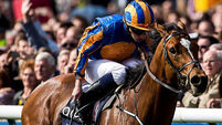Aces set for St James's Palace Stakes showdown