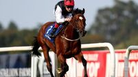 Dermot Weld flying high with Free Eagle
