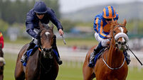 Curvy faces stiff test in Oaks
