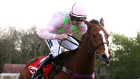 Faugheen can confirm his superstar status in Champion Hurdle