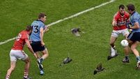 Pigeons making their presence felt as seeds of change take root at Croke Park