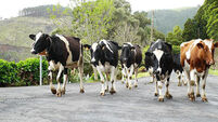 Dairy leaders gather to discuss industry trends
