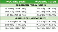 Cattle marts report: Good times for sellers but tough for buyers as every Friesian in the ring exceeds €2/kg