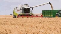 Winter barley could average 3.5-4t per acre