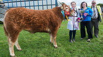 Anna's story: From Belarus to Bandon Agricultural Show