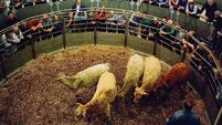 Further ruling over cattle sale protest