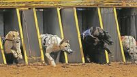 Row over greyhound exports to China