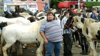 Video and pics from Cahirmee Horse Fair